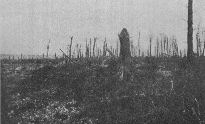 Moreuil Wood et l'ONAC Seneca10