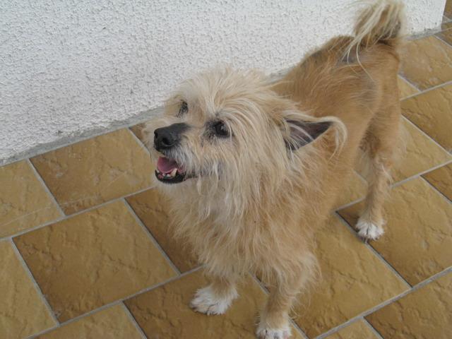 Rusty petit chien de 14 ans environ sur Cani-sénior Paques13