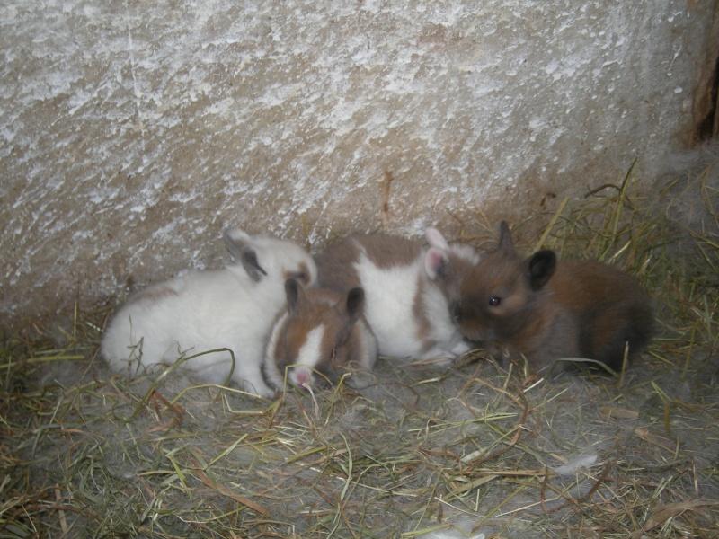 L'élevage de Kevin.L Dscn1721