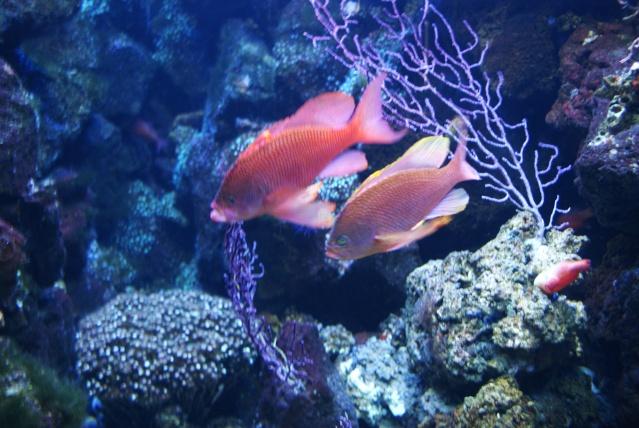 L'aquarium du cap d'adge Dsc00610