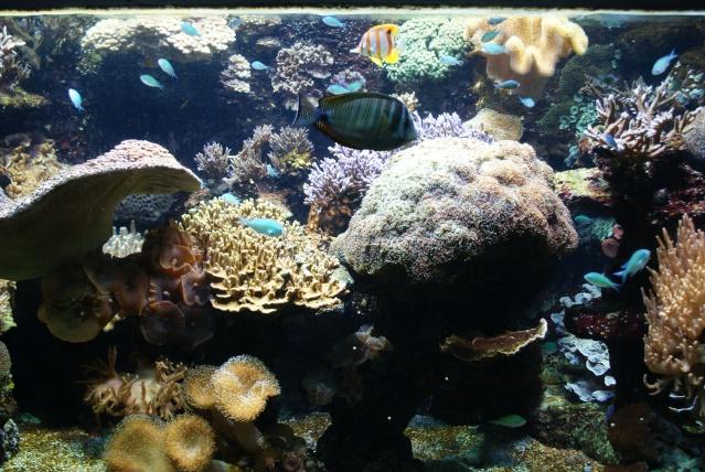 L'aquarium du cap d'adge Dsc00612