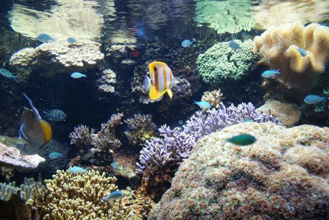 L'aquarium du cap d'adge Dsc00614