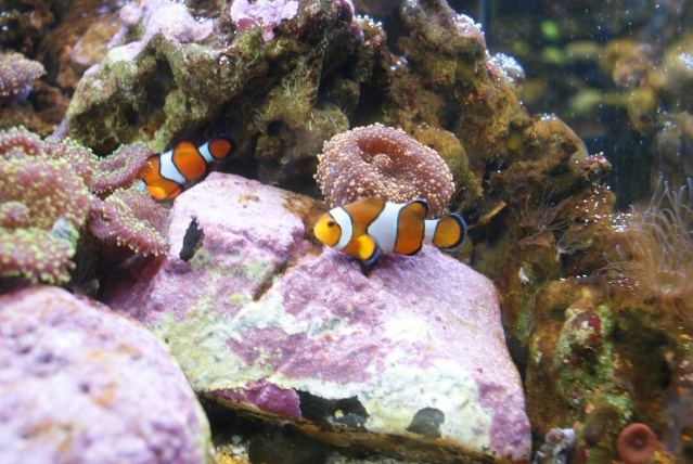 L'aquarium du cap d'adge Dsc00710