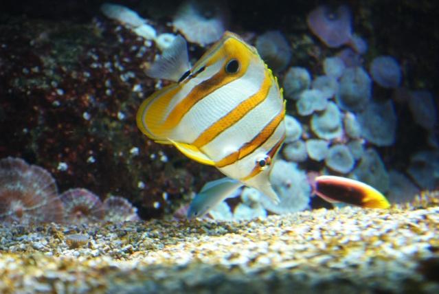 L'aquarium du cap d'adge Dsc00713