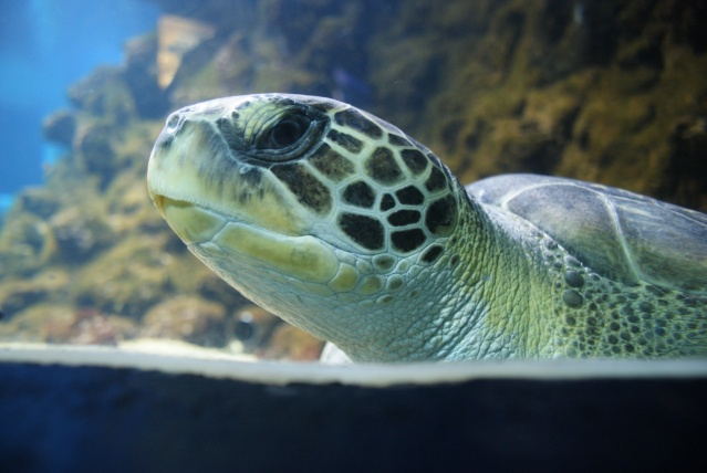 L'aquarium du cap d'adge Dsc00715