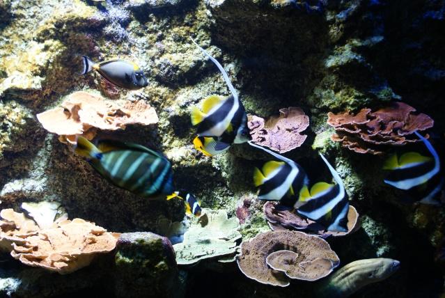L'aquarium du cap d'adge Dsc00716