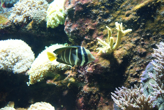 L'aquarium du cap d'adge Dsc00717