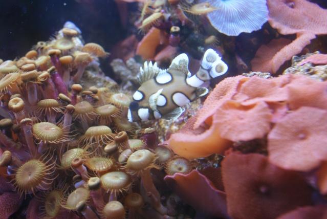 L'aquarium du cap d'adge Dsc00718