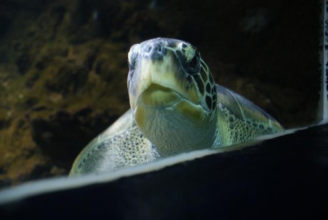 L'aquarium du cap d'adge Dsc00720