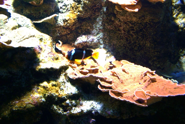 L'aquarium du cap d'adge Dsc00721