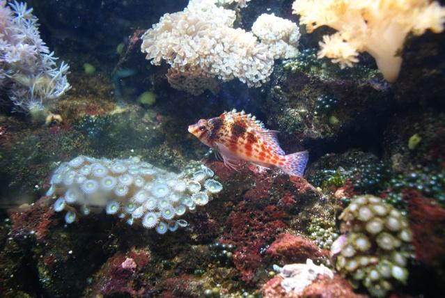 L'aquarium du cap d'adge Dsc00810