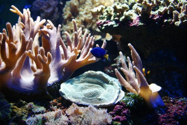 L'aquarium du cap d'adge Dsc00811