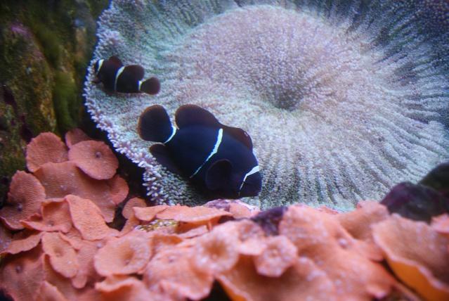 L'aquarium du cap d'adge Dsc00813