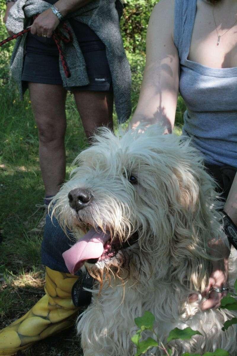 Nos chiens bientôt à l'adoption Object32