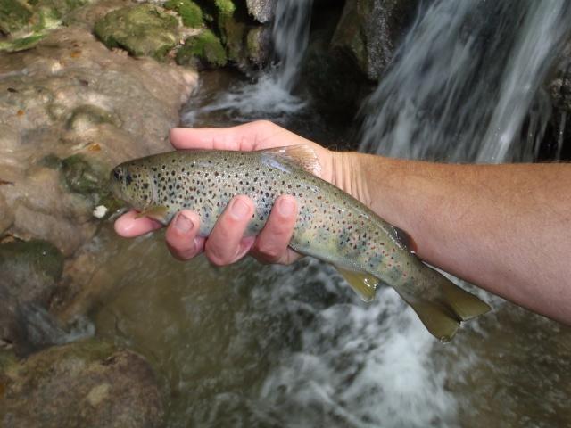 ruisseau - Ruisseau cascadeur Haut_s10