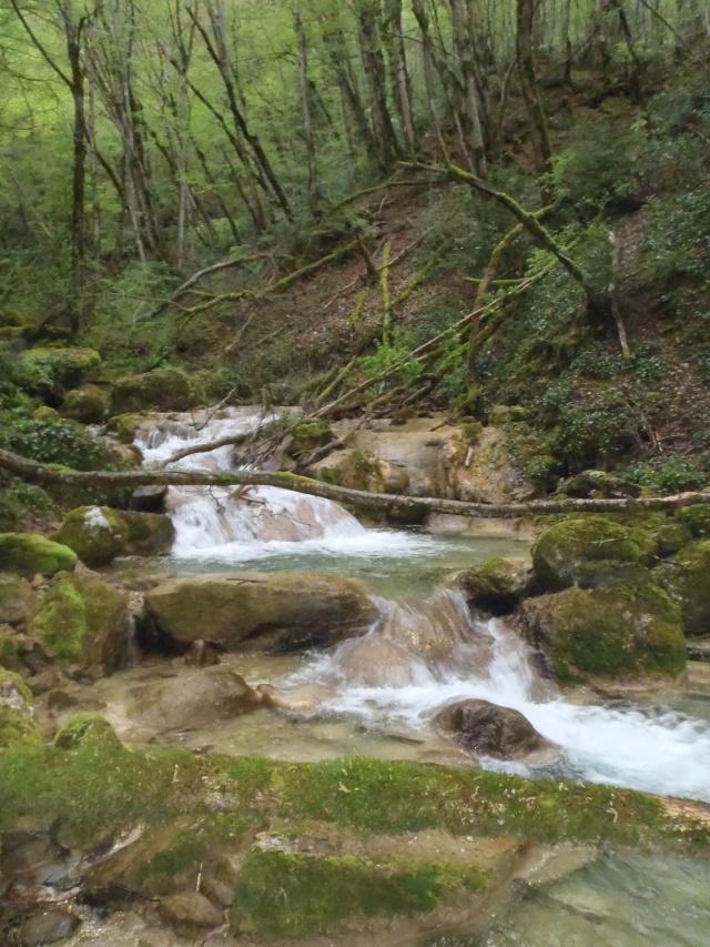 ruisseau - Ruisseau cascadeur P4160011