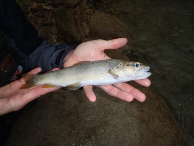 ruisseau - Ruisseau cascadeur P4160013