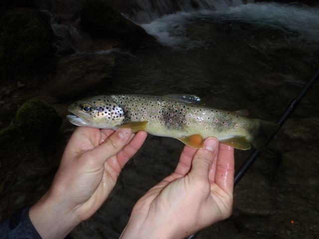 ruisseau - Ruisseau cascadeur P4160015