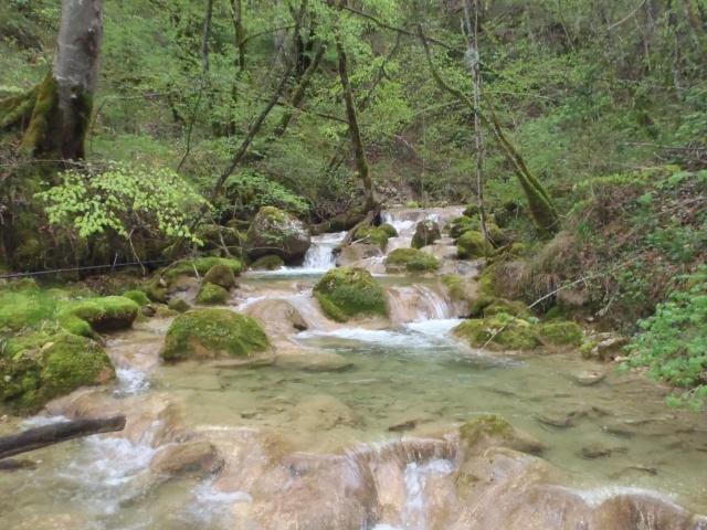 ruisseau - Ruisseau cascadeur P4160019