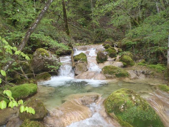 ruisseau - Ruisseau cascadeur P4160020