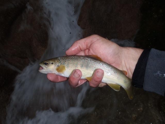 ruisseau - Ruisseau cascadeur P4160023