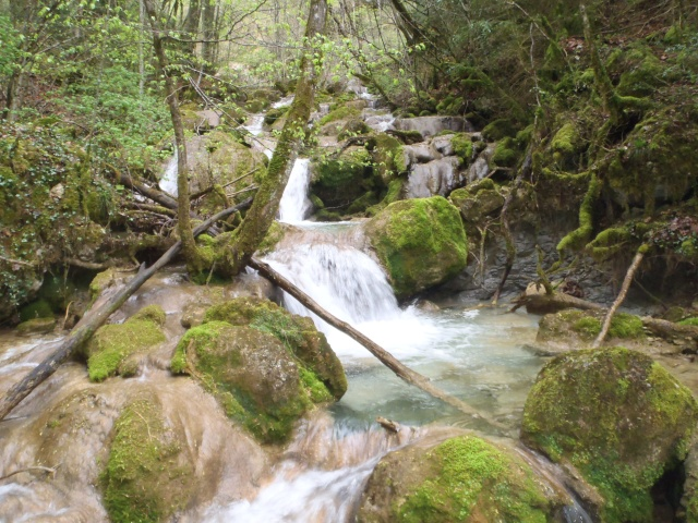 ruisseau - Ruisseau cascadeur P4160024