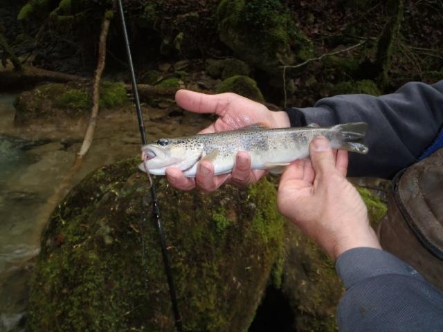 ruisseau - Ruisseau cascadeur P4160025