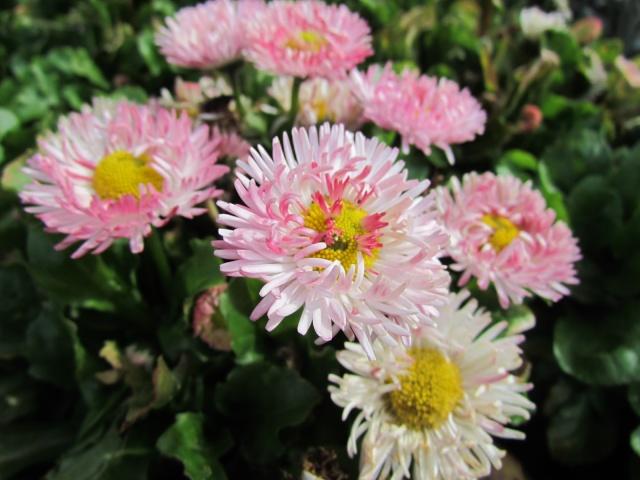 fleurs en vrac! - Page 13 Bijou_18