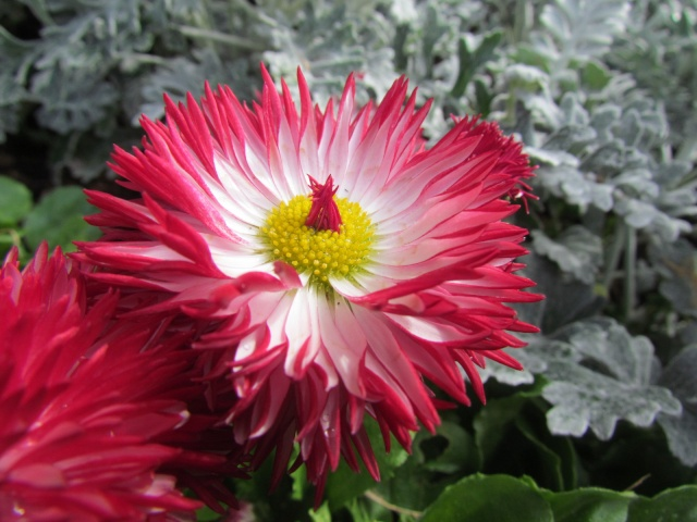 fleurs en vrac! - Page 13 Bijou_20