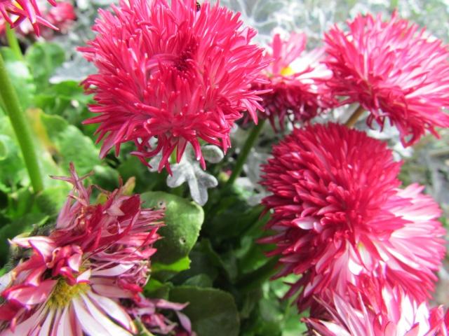 fleurs en vrac! - Page 13 Bijou_21