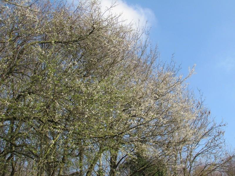 Dans l'attente du printemps ... Les bourgeons - Page 3 Img_0015