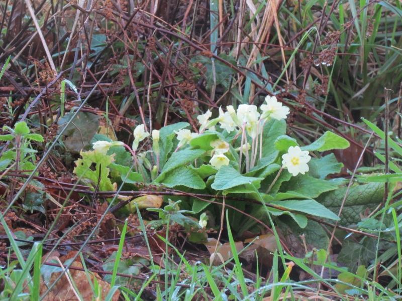 Dans l'attente du printemps ... Les bourgeons - Page 3 Img_0022