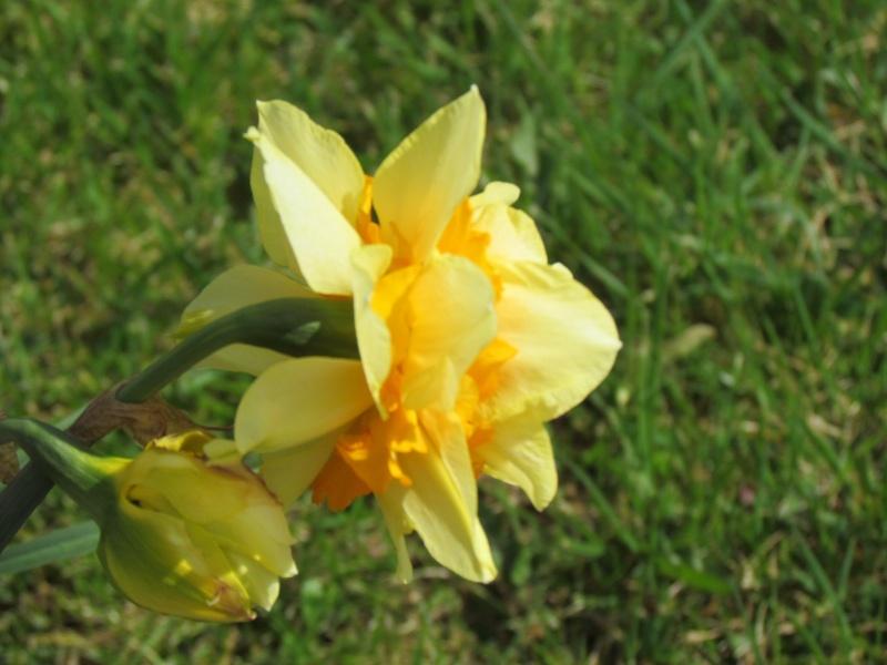 Dans l'attente du printemps ... Les bourgeons - Page 3 Le_pri10