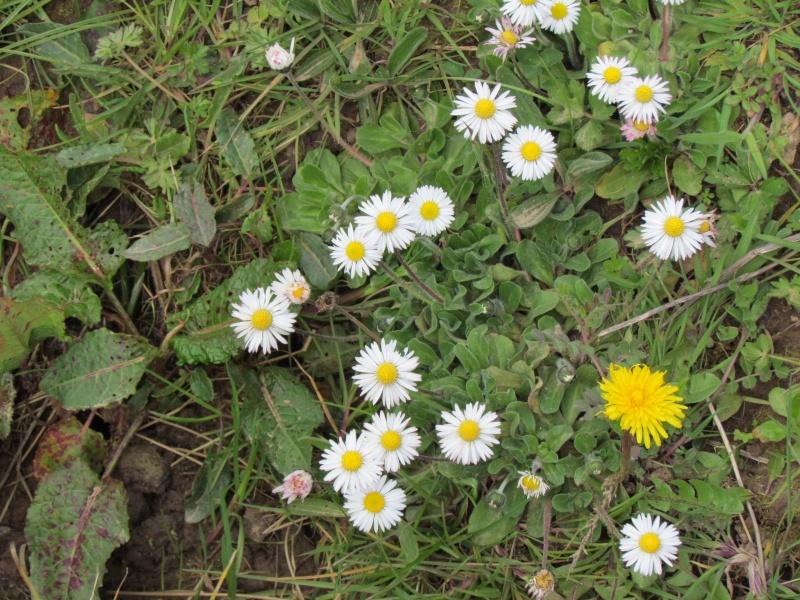 Dans l'attente du printemps ... Les bourgeons - Page 3 Le_pri12