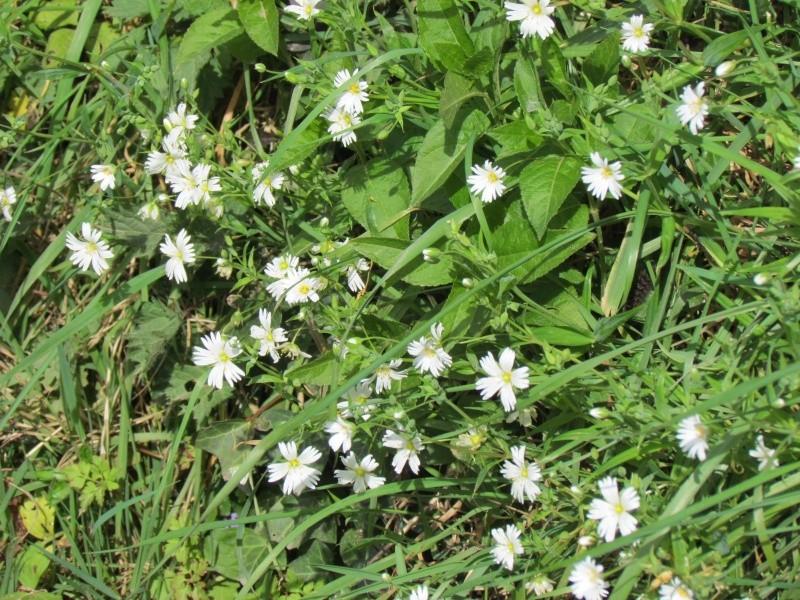 Dans l'attente du printemps ... Les bourgeons - Page 3 Le_pri13