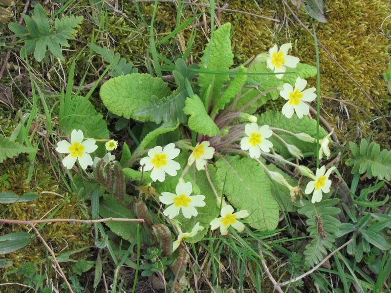 Dans l'attente du printemps ... Les bourgeons - Page 3 Le_pri14