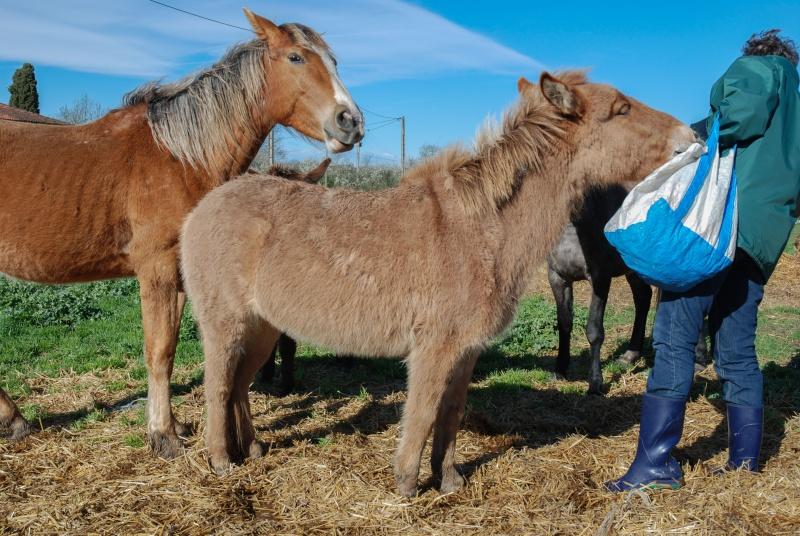 DIABLOTINE - ONC Mule née en 2014 - adoptée en juin 2016 par Amélie Dsc_0010