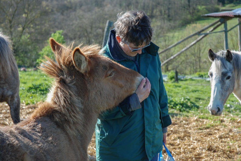 DIABLOTINE - ONC Mule née en 2014 - adoptée en juin 2016 par Amélie Dsc_0041