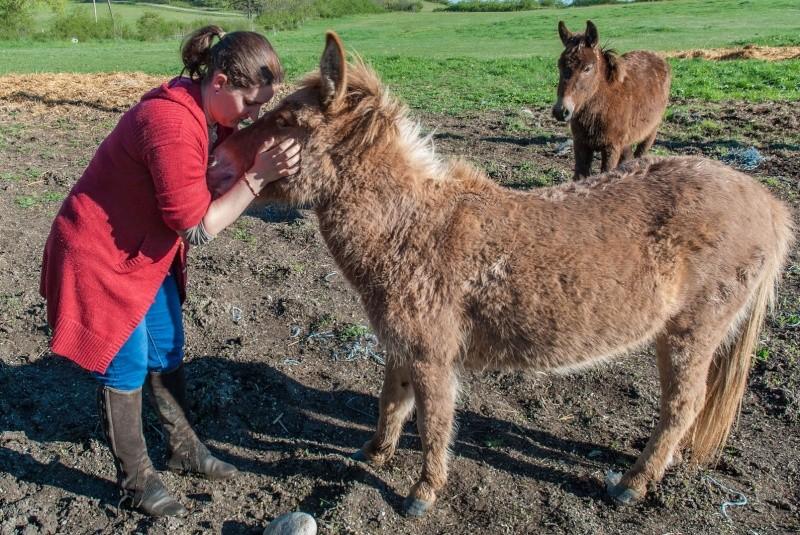 DIABLOTINE - ONC Mule née en 2014 - adoptée en juin 2016 par Amélie Dsc_0055