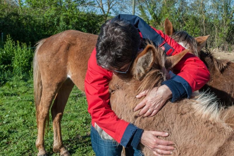 DIABLOTINE - ONC Mule née en 2014 - adoptée en juin 2016 par Amélie Dsc_0057