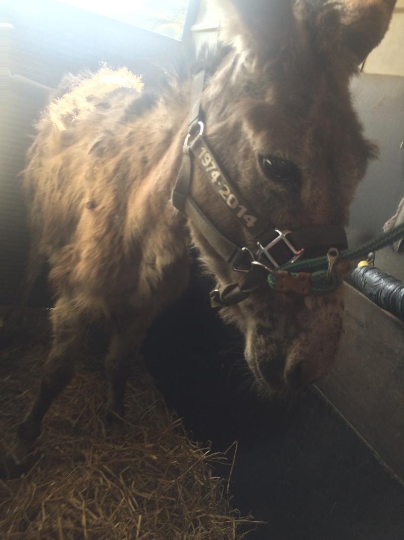 ADELE - ONC âne née en 2009 - décédée avant son adoption, en février 2017 Img_1210