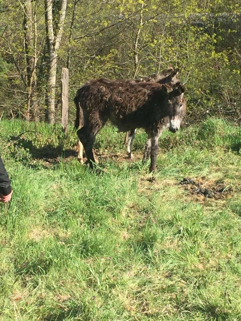 ERNESTINE - ONC âne née en 2011 - adoptée en février 2017 par Cécile Img_1710