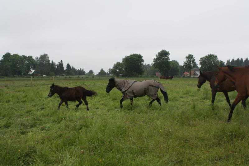 MASCOTTE - ONC poney née en 1993 - adoptée en octobre 2014 par Elsa - Page 2 Img_5618