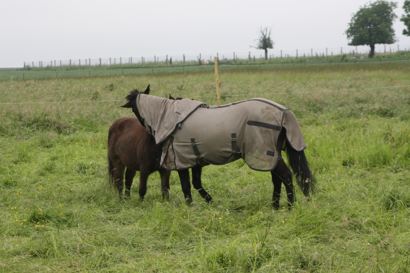 MASCOTTE - ONC poney née en 1993 - adoptée en octobre 2014 par Elsa - Page 2 Img_5622