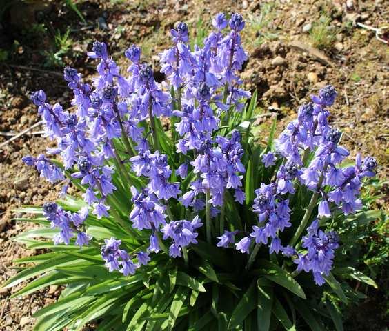Blue..........bleu !!! - Page 3 07042011