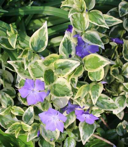 Blue..........bleu !!! - Page 4 13042016