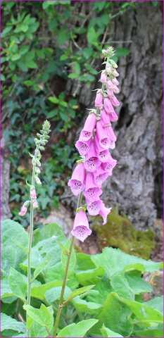 Le jardin en rose ! 14052010