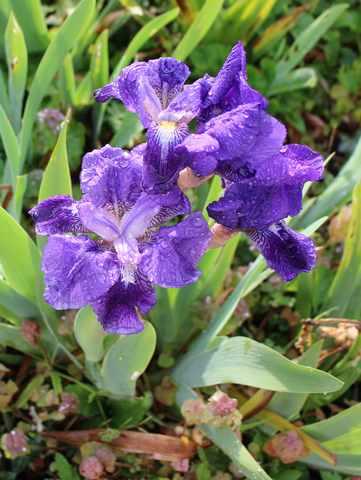 Blue..........bleu !!! 27032011