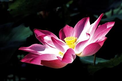 Joyeux anniversaire Gepeto !! Lotus10