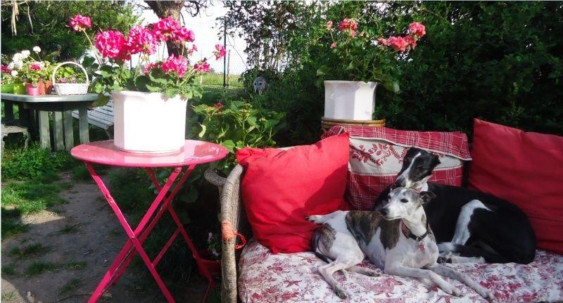 TADEO, barbudo bringé, 3 ans, en accueil chez Laurenciane  Adoptée  - Page 4 Tadeo710